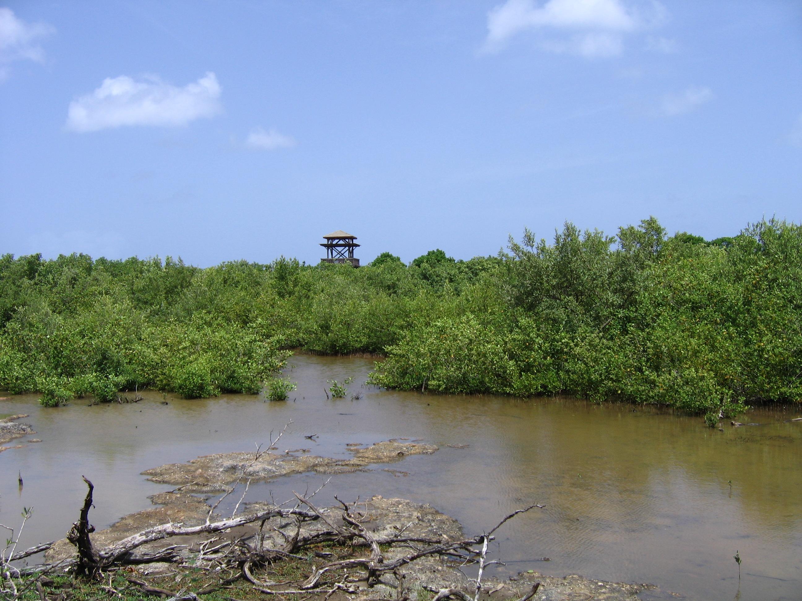 Marais de port louis p le relais zones humides tropicales - Pole emploi port louis guadeloupe ...