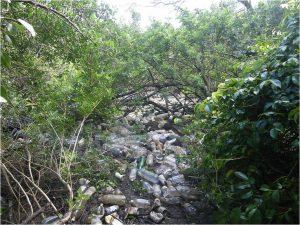 Début de l'action – Tas de déchets mangrove de Robinson © Pierre Olivier CASTEX