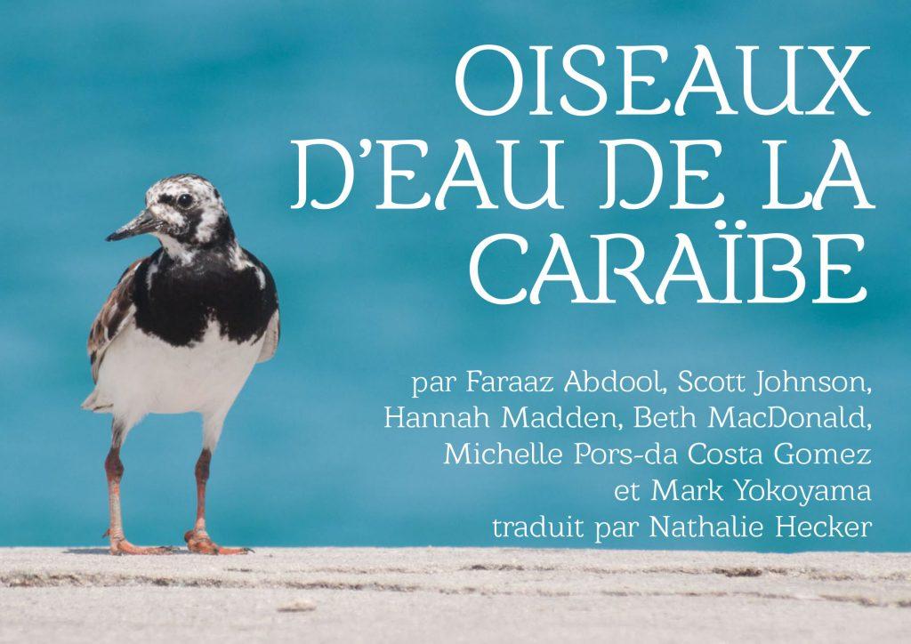 Oiseaux-deau-de-la-Caraibe