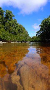 Bras de mangrove ©Alexandre Laubin