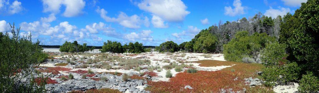 La transition entre la steppe salée, les sansouires et la mangrove se lit aisément, aucune activité humaine ne perturbe l'organisation naturelle des milieux ©Alexandre Laubin