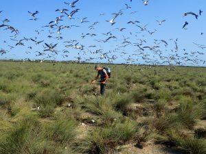 Recensement des nids de sternes ©TAAF