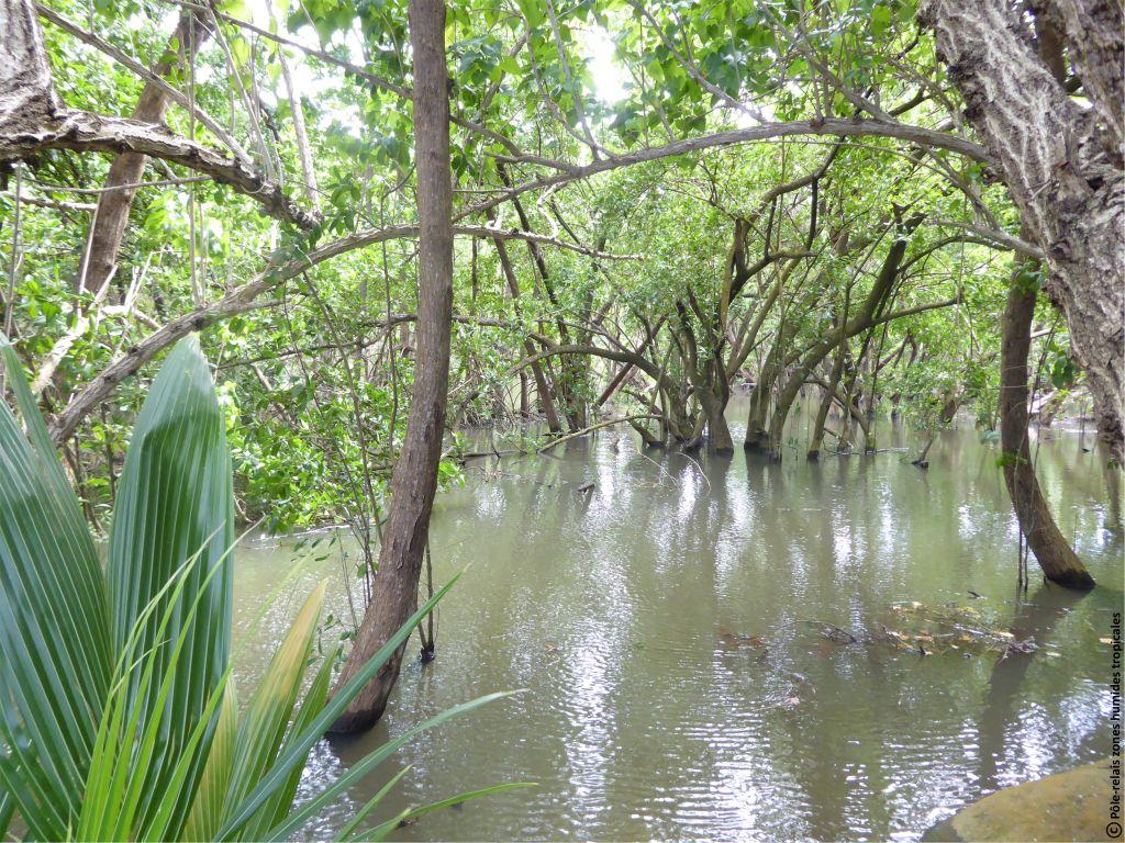 Photos p le relais zones humides tropicales - Pole emploi port louis guadeloupe ...