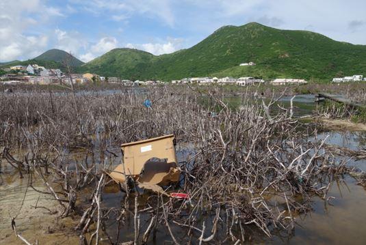 Macrodéchets dans l'étang de la Barrière © Antenne de Guadeloupe du Conservatoire du littoral